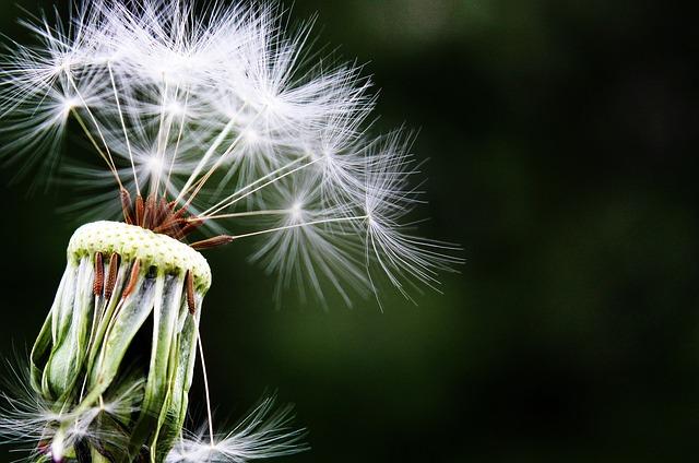 semeno
