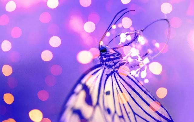 Motýľ s bielymi krídlami obklopený fialovým svetlom.jpg