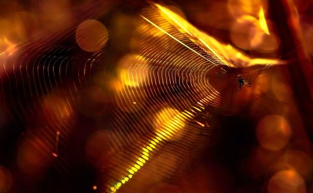 Pavučina s pavúkom, cez ktorú presvitá svetlo.jpg